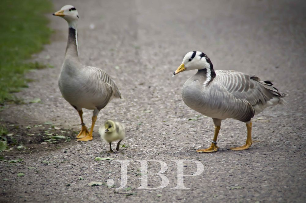 Family walk by Joe Butler