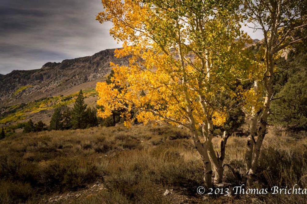 Fall in the Sierra by Tom911R7