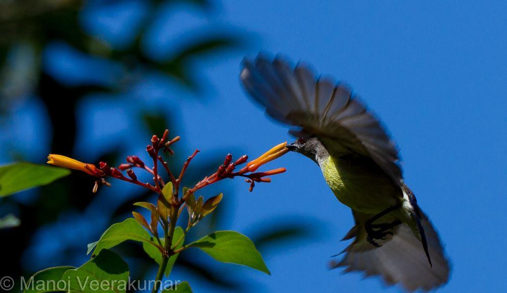 in flight by manoj veerakumar
