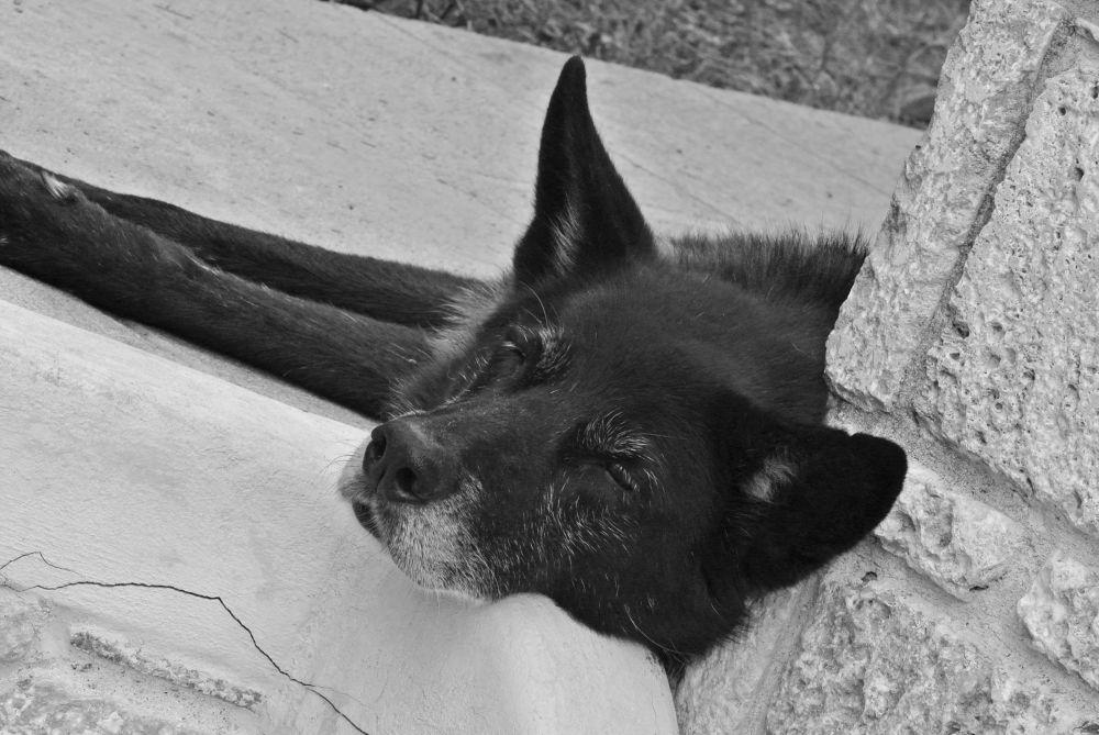 dog2.jpg by housemd13