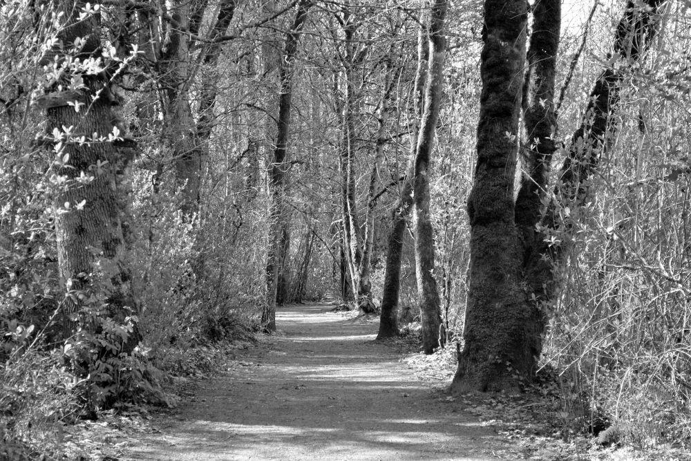Walking Through Trees by karmel