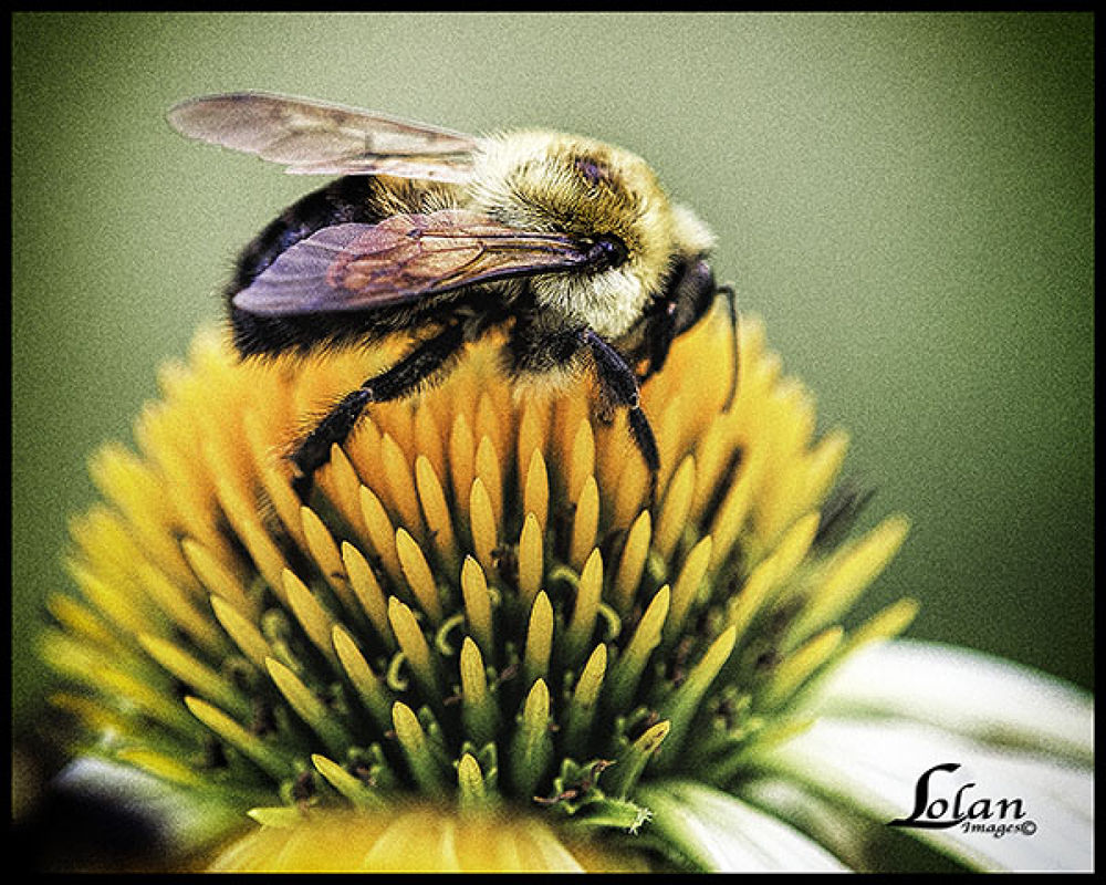 Photo in Macro #macro #bee #insects