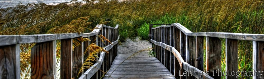 Beachside_Oak by lennylacey