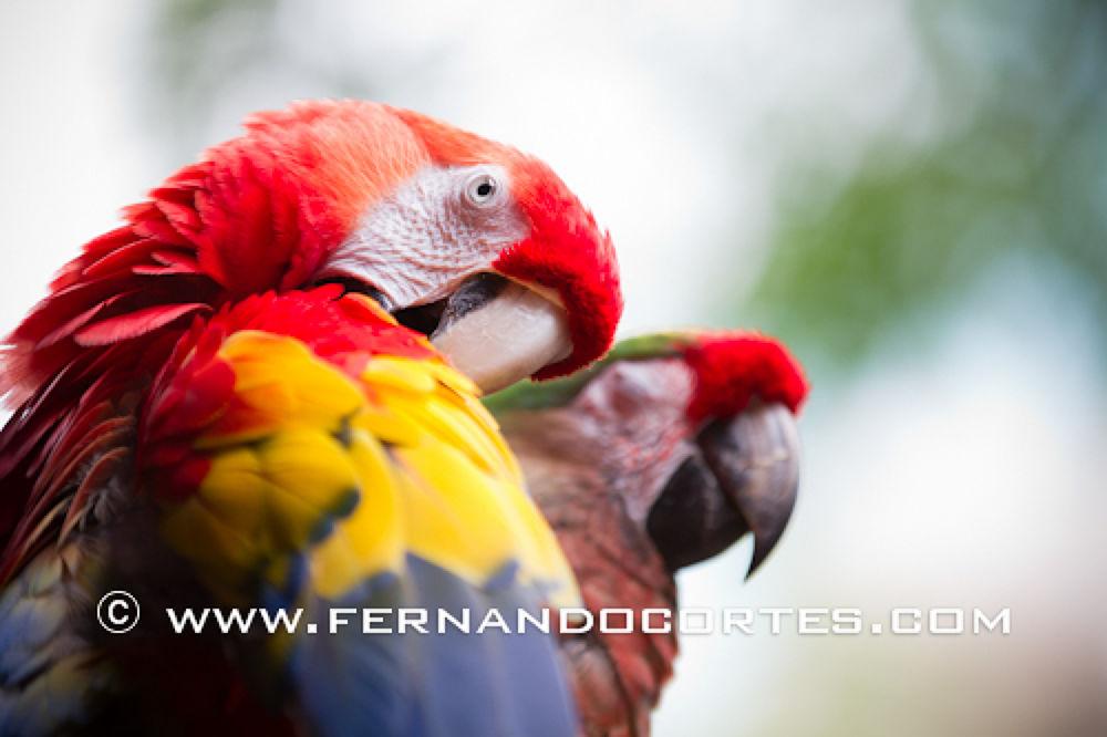 FernandoCortes_HQ_1006 by outsider