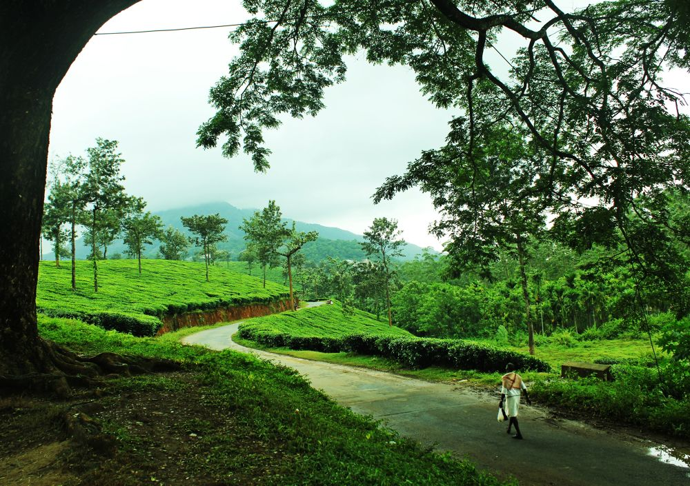 Walk of Life is Beautiful with its twist and turns by Rajeesh Champungal