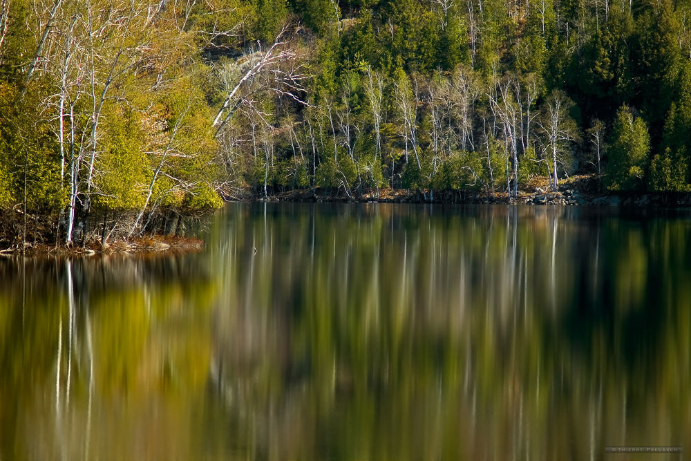 Reflections of birch on mirror lake by Thierry Preusser