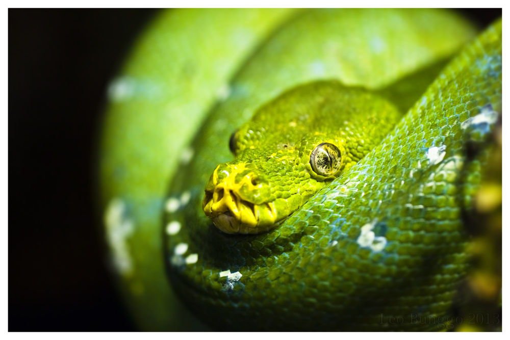 The Snake by leobunggo