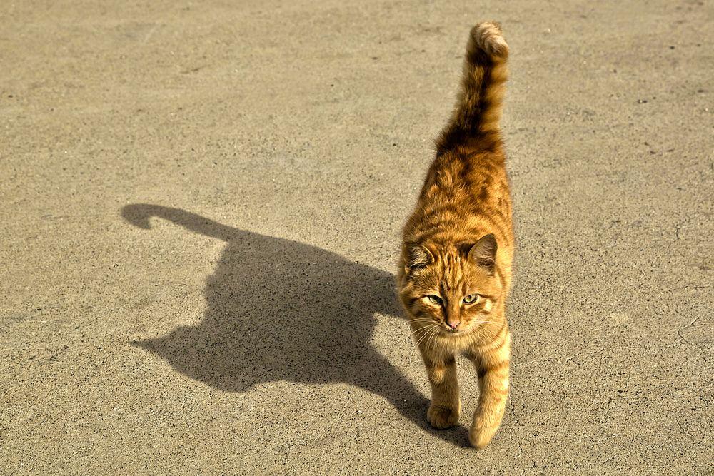 cat by Yılmaz Savaş Kandağ