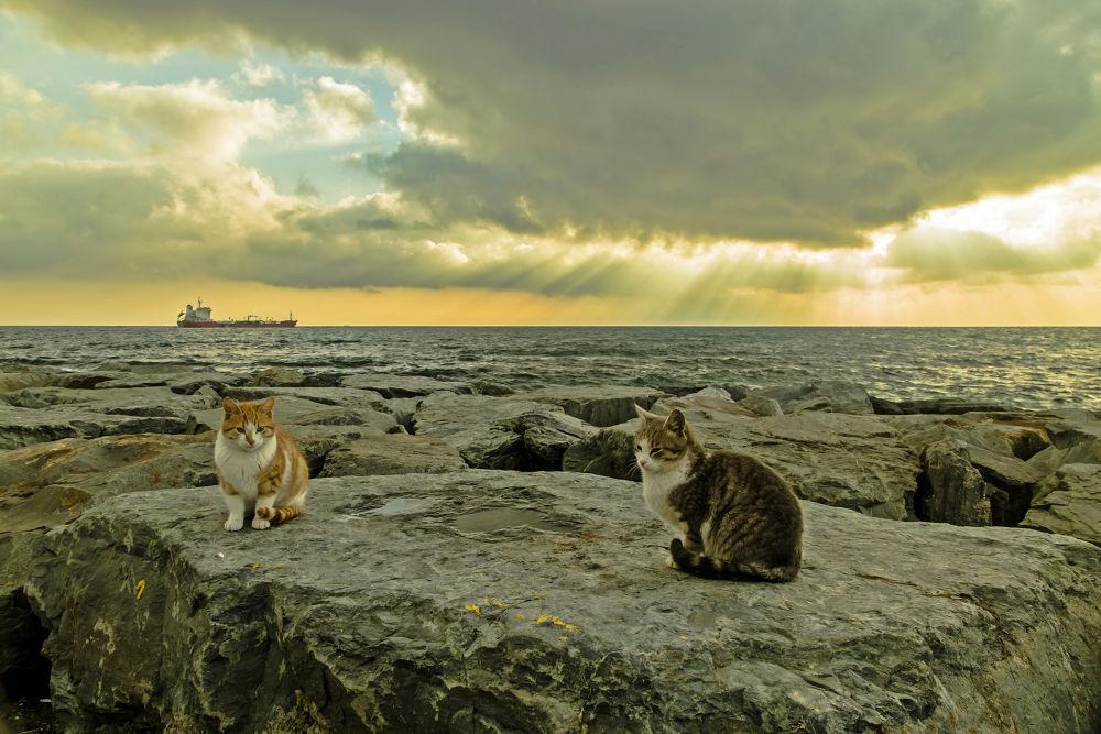 cats by Yılmaz Savaş Kandağ