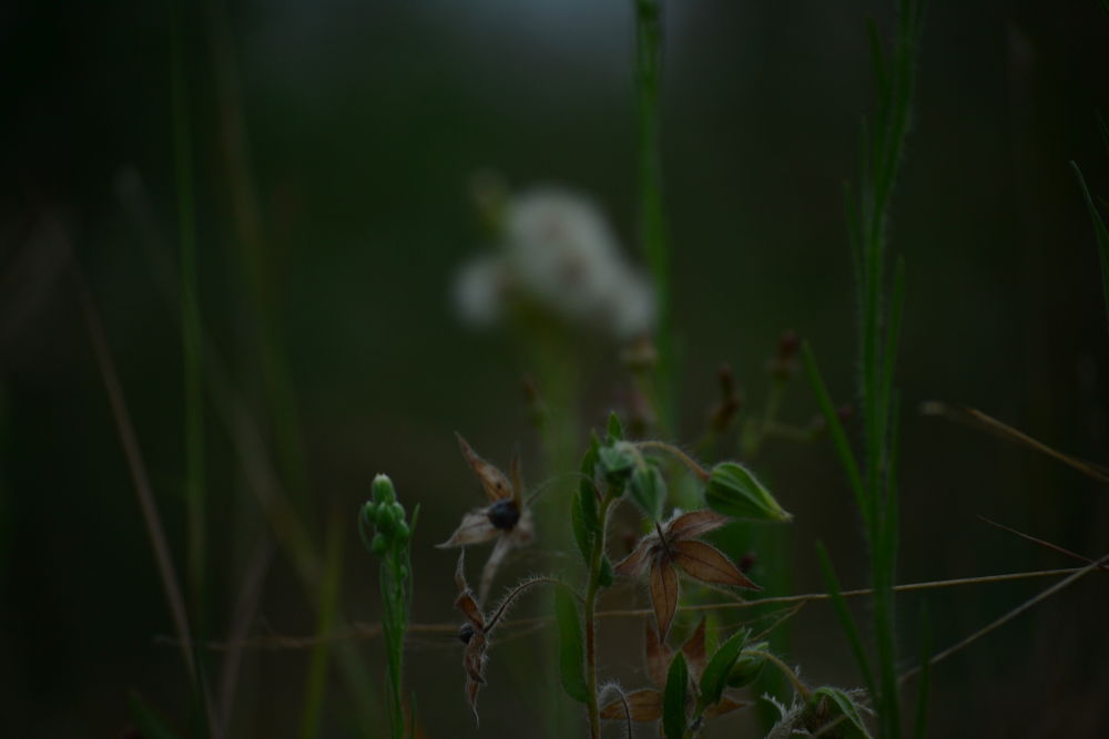 Lovely little things. by Anosh