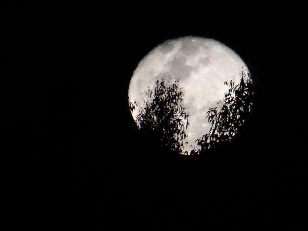 Lua cheia by Maria Elisa de Carvalho