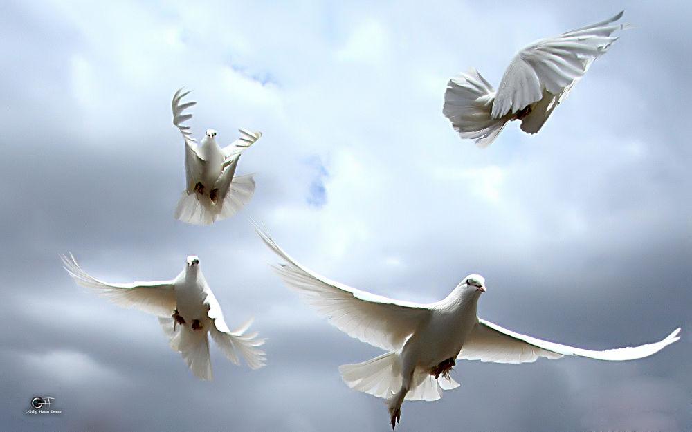 FOR PEACE by Galip Hasan Temur