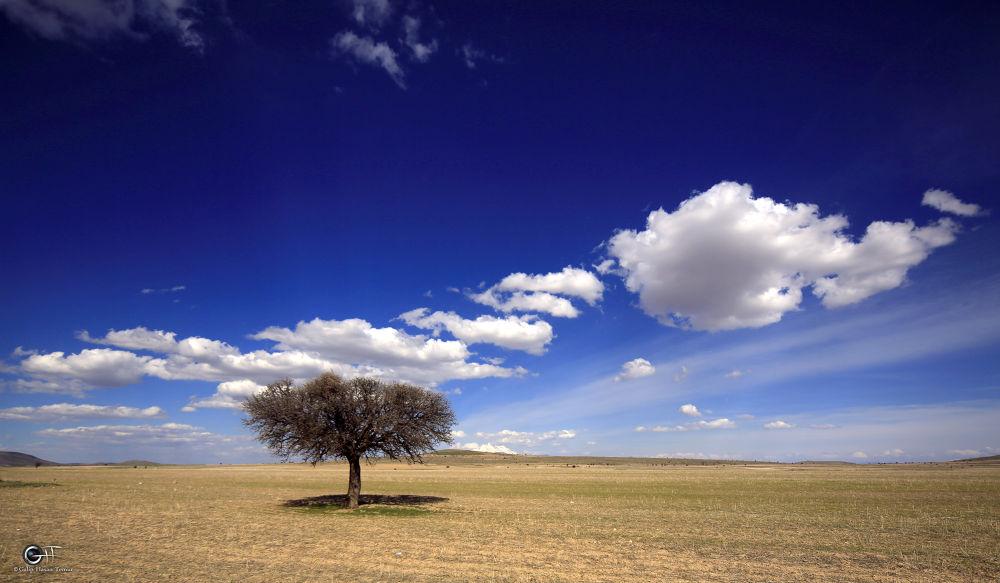 TREE by Galip Hasan Temur
