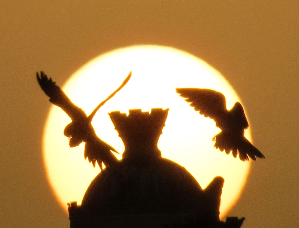 Sunset with birds by S M Rezaul Haque