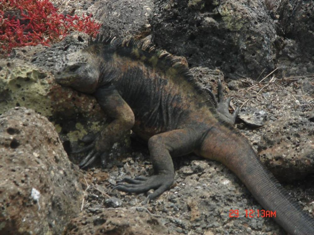 Galapagos by Gary Whaley by gary whaley