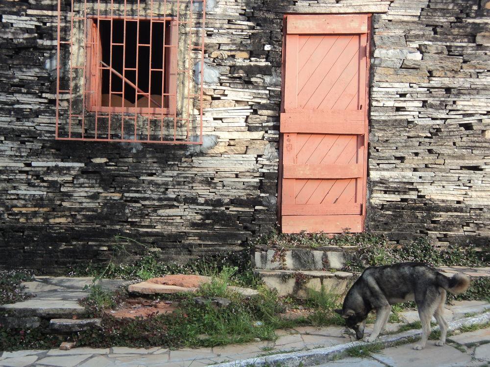 The dog by felipmmelo