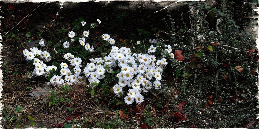 Petites Fleurs, by Liborio Drogo