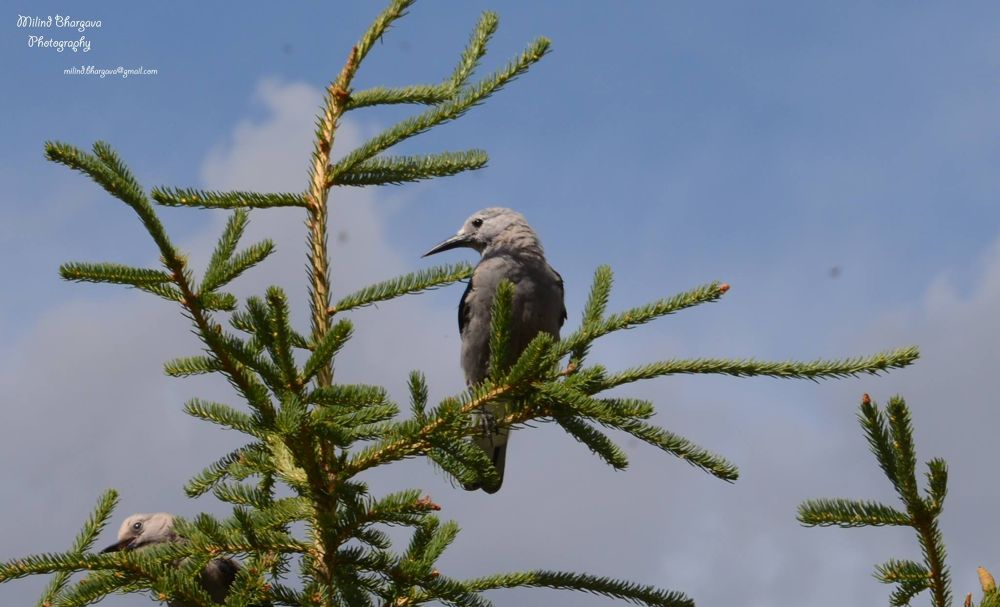 A bird perched atop a Christmas Tree by milind bhargava