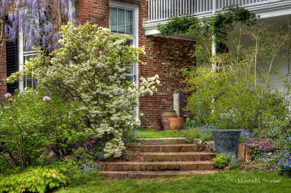 Long Hill Garden Steps by Monica Scanlan