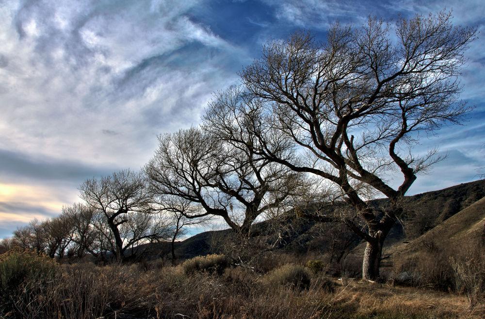 In line trees by BlaineLandresse