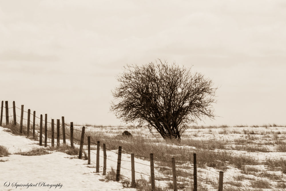 Lonely Tree by Shirley Cates