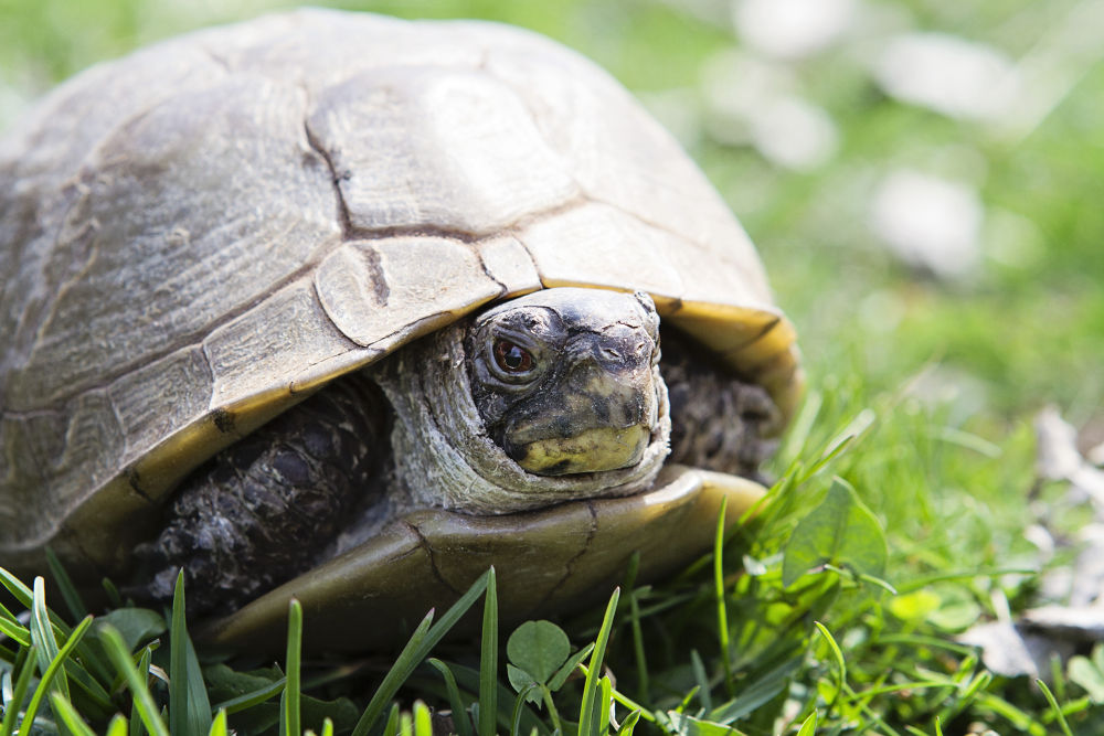 Turtle by Krissi Gates