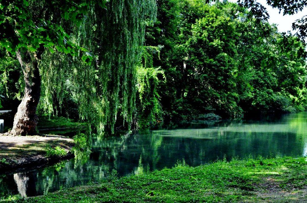 Green Summer by Alessandra Fierimonte