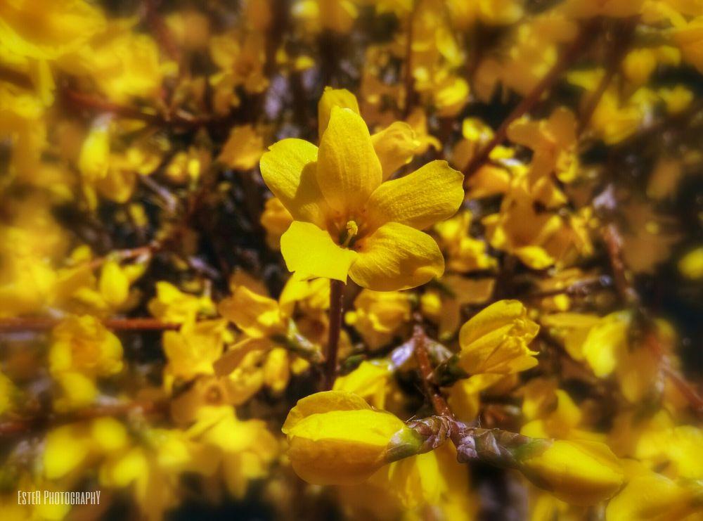 Yellow spring II. by esmane03