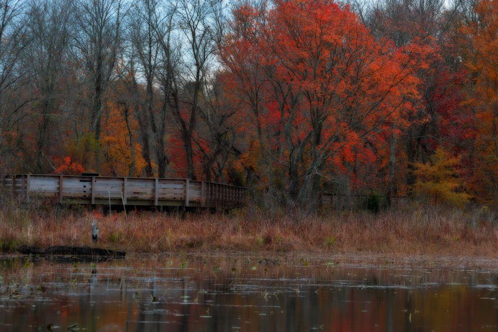 Autumn Bridge by Itsmemjt