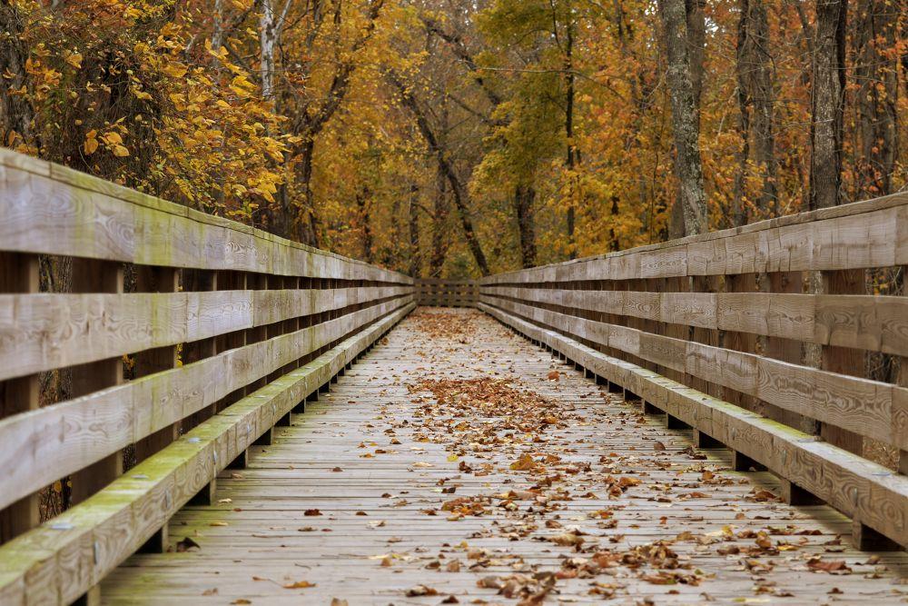 The bridge by Itsmemjt