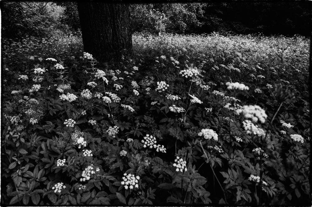 DSC06944 by Олег Ким
