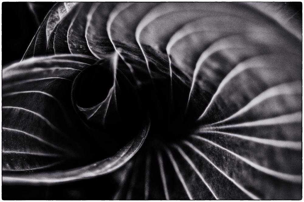 DSC03673 by Олег Ким