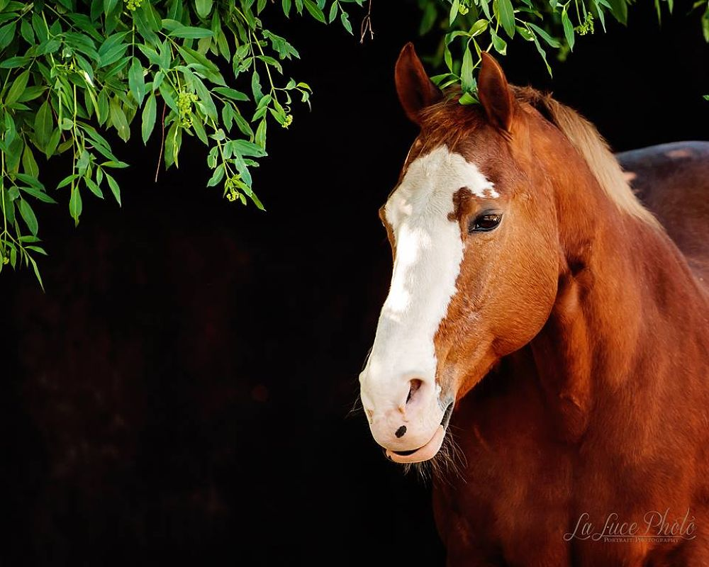 Springtime at the Ranch by lalucephoto