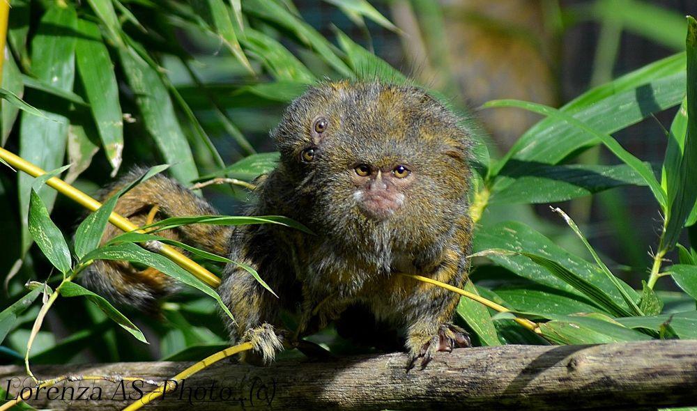 monkeys by Lorenza Costa