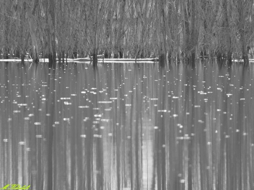 Tree in the lake by mrkhalafi