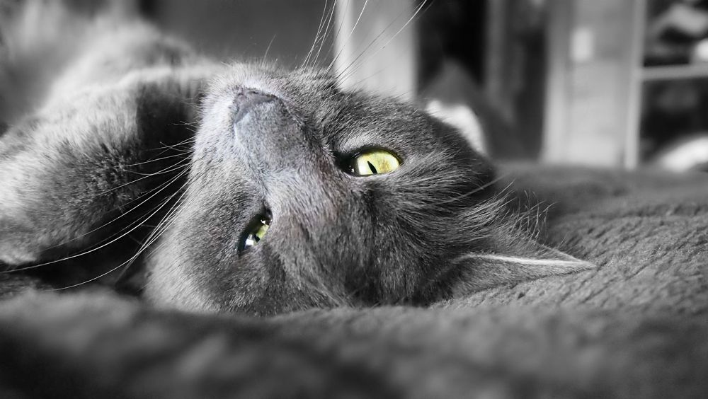 Upside down Cat by Sarah Haywood Photography
