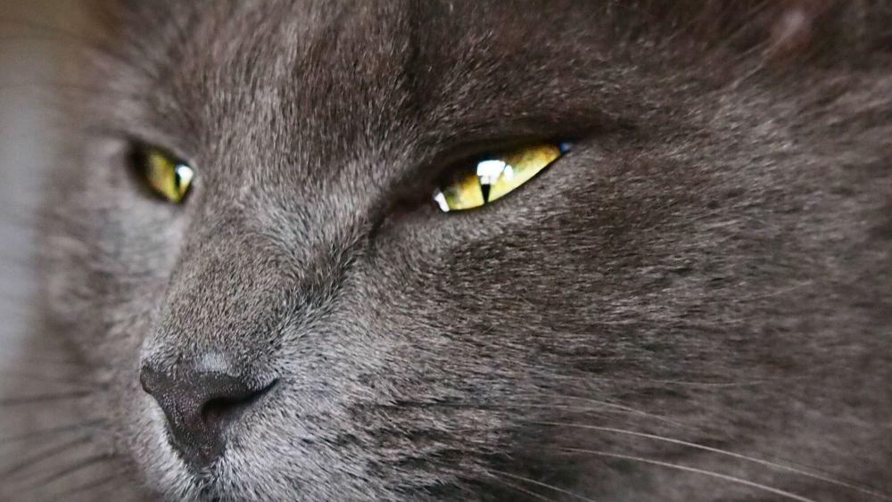 Tinka's eyes by Sarah Haywood Photography