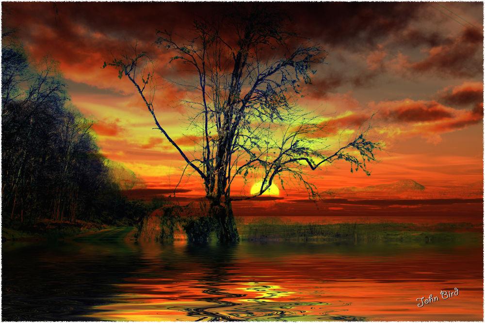Sunset Tree by John Bird