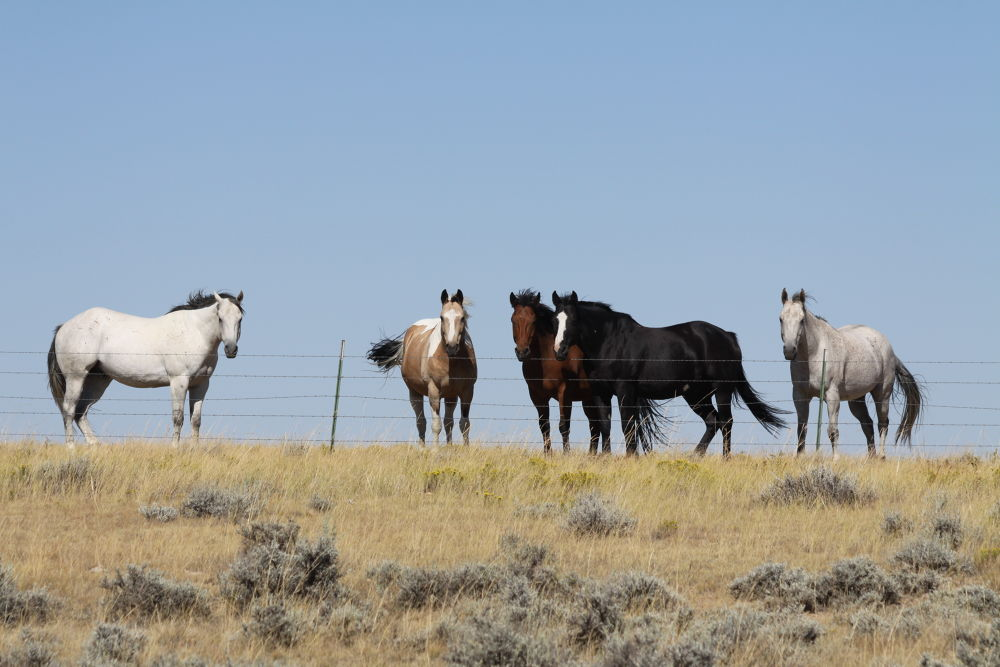 Horses in the Wind by Carole Martinez