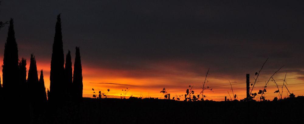 tramonto fra i vigneti by Cristina Masoni