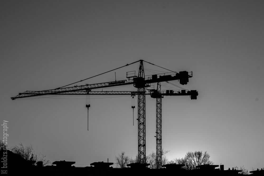 CraneLuv 03/2014 by Boldizs Attila