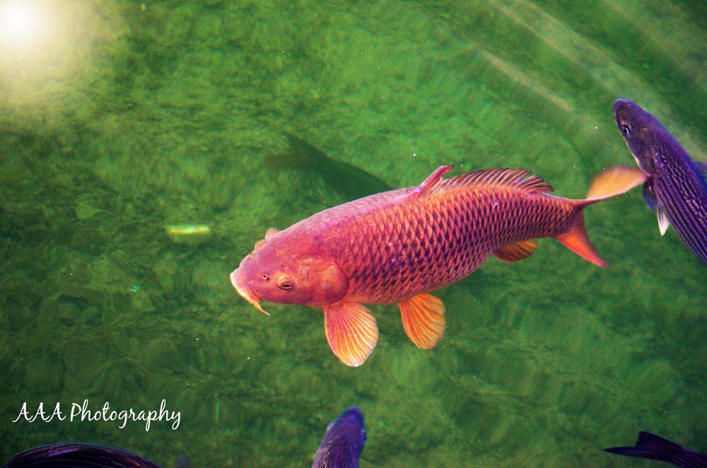 fishin by AAA Photography