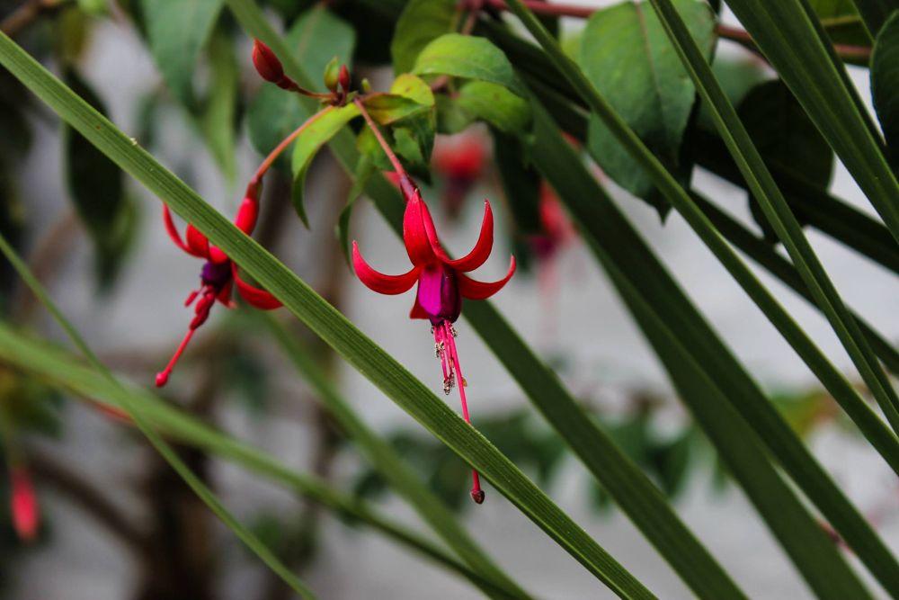 Flowers serie III - Entre las hojas by Silvana Aríncoli