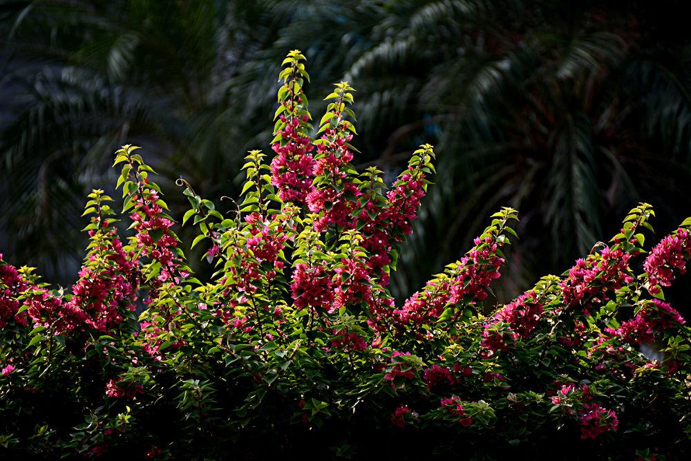 FLOWER by Jai Kumar