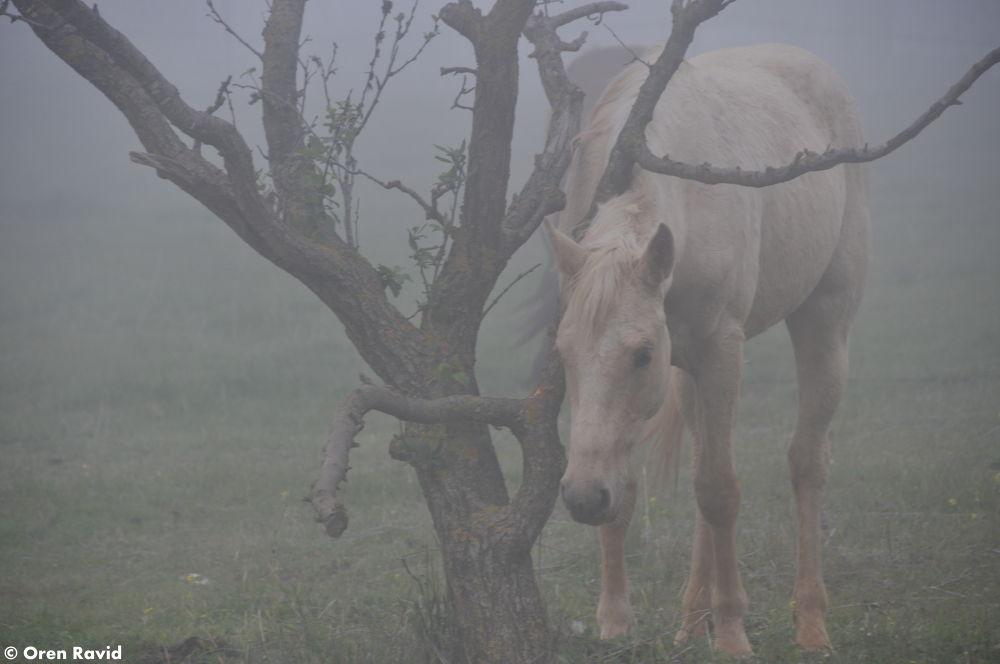 Dream Horse by Oren Ravid