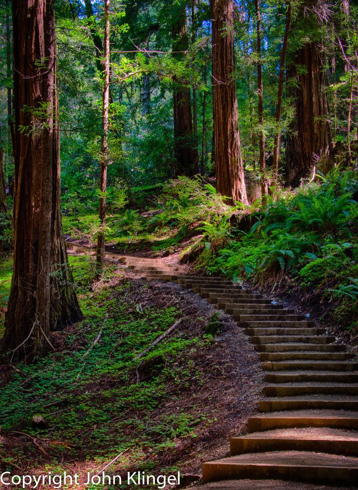 Muir Woods by John Klingel