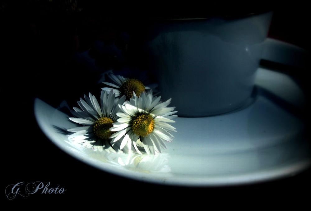 spring coffee by Gordana