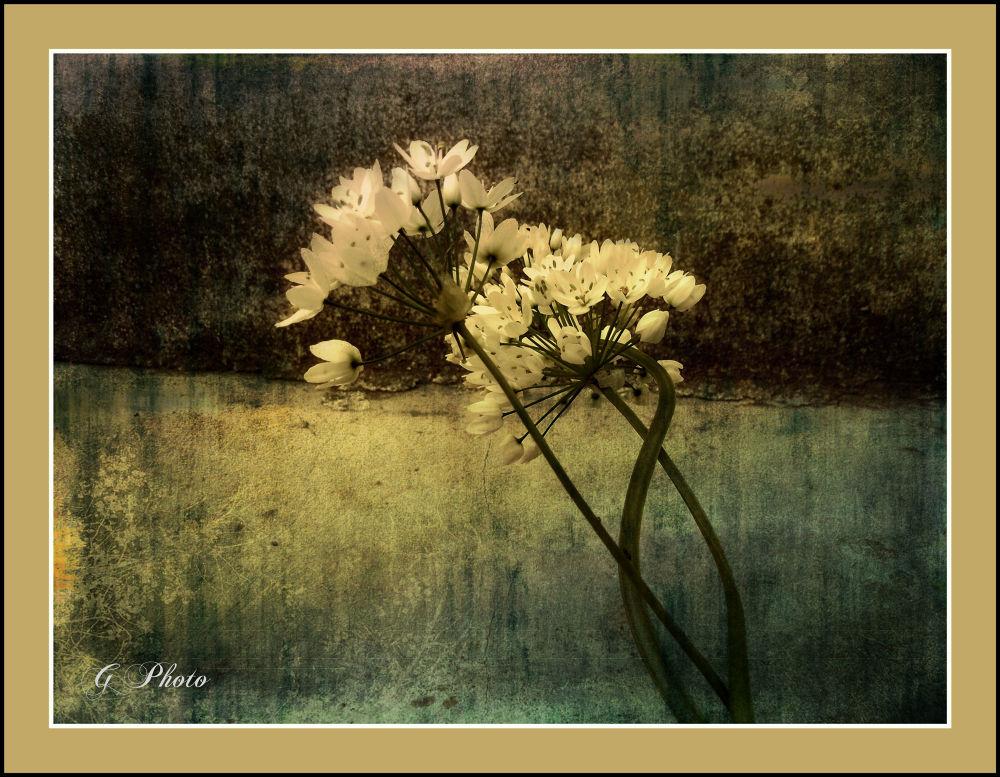 X grlim te u mislima T by Gordana