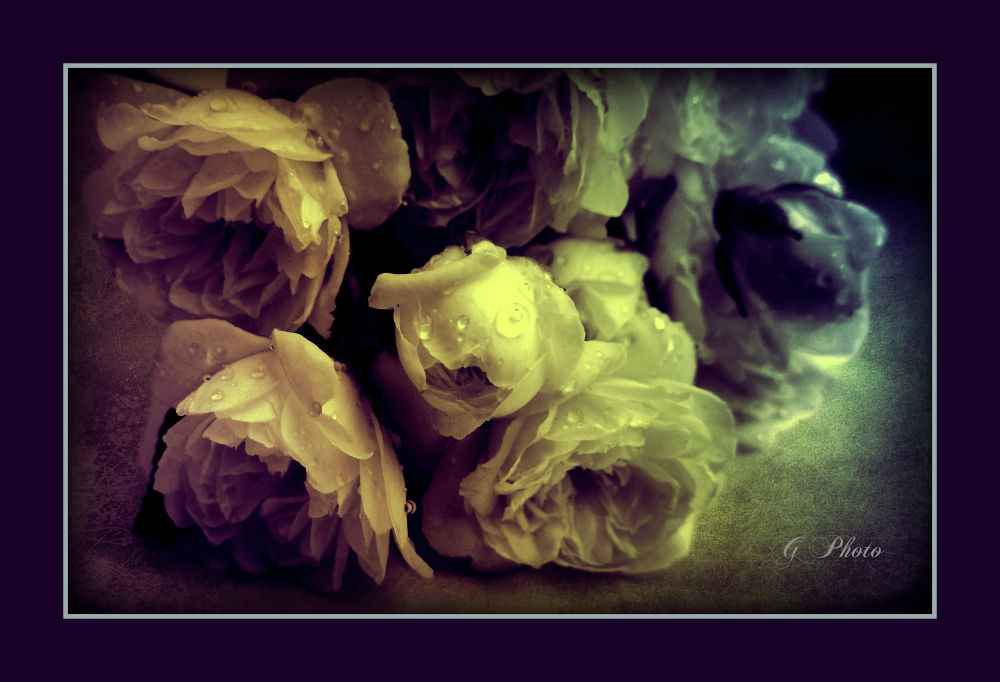 Untitled by Gordana