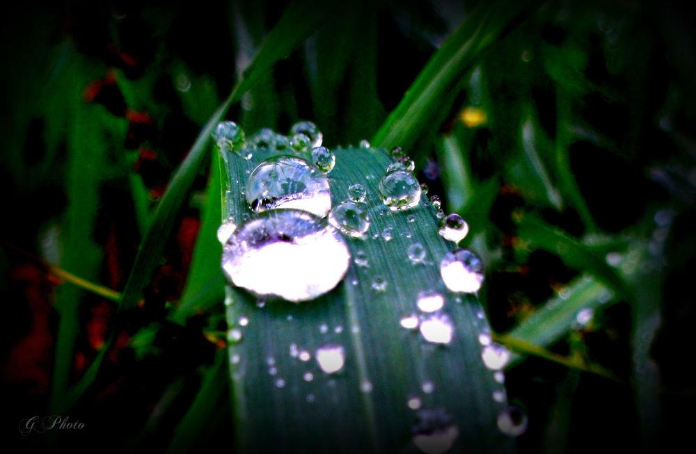 Crystal by Gordana